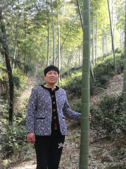 紫砂壶艺师图片:顾老师